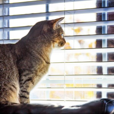 Cat - Venetian Blinds